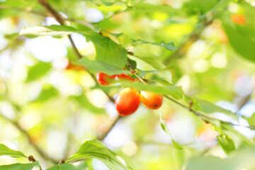 Green dogwood №32488