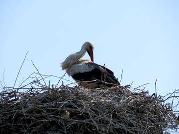 Stork №32381