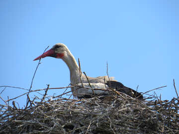 The stork in the nest №32380