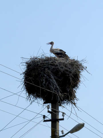 The stork in the nest №32385