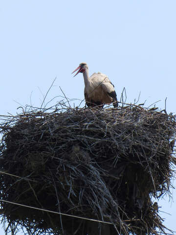 The Stork in the nest №32387