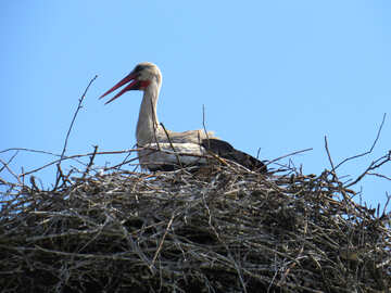 The stork in the nest large №32379