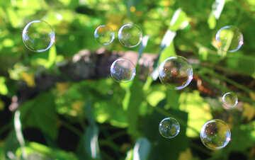 Multicolored bubbles №32952