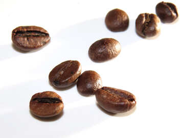 Coffee grains on white background №32300
