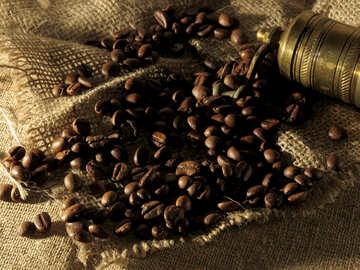 Natürliche Kaffee №32259
