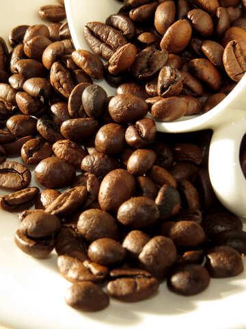 Natürliche Kaffee №32282