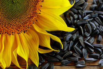 Wallpaper on the desktop for the lover of sunflower seeds №32751