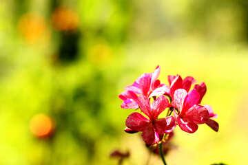 Beautiful indoor flower №32403