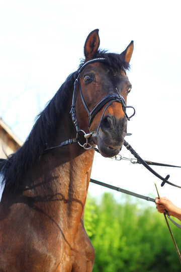 The surprised look of the horse №32336