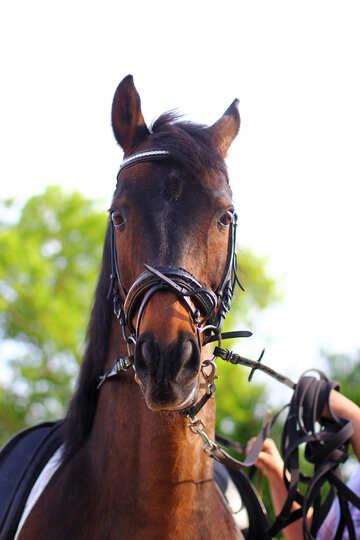Cavallo volto sorpreso №32333