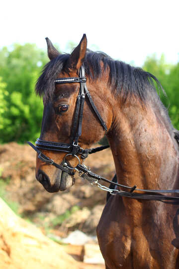 Horse`s neck №32347