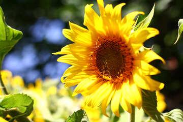Beautiful flower №32837