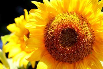 Solar flower №32831