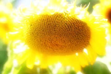Solar flower №32836