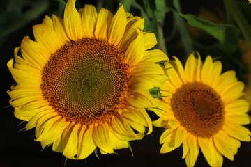 Flowers yellow №32821