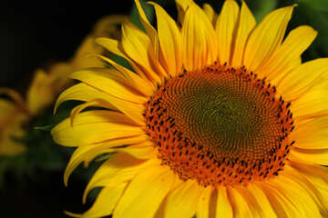 A yellow flower №32820