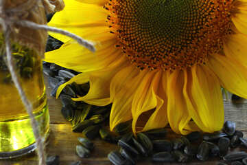 Sunflower №32746