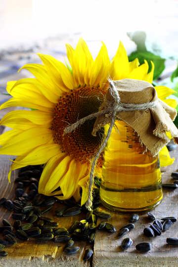 Oil crops №32716