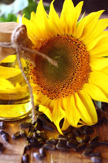 Home sunflower oil №32713
