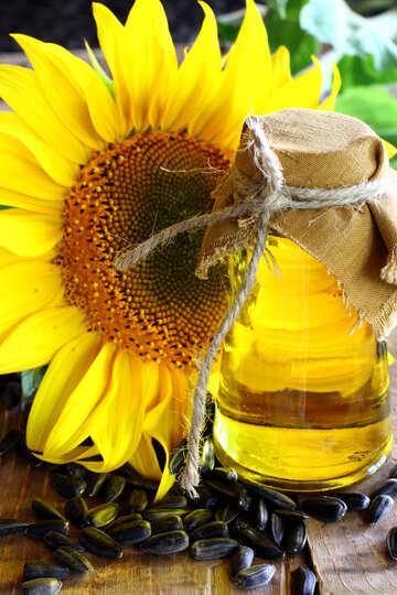 Homemade vegetable oil №32712