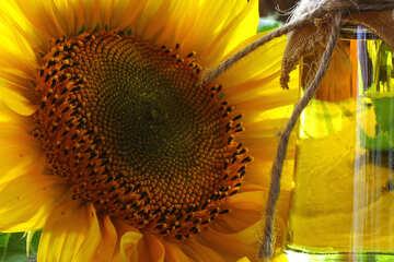Organic sunflower oil №32731