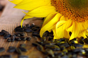 Sunflower seed №32725