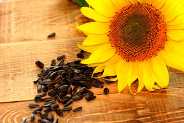 Sunflower seed oil №32760