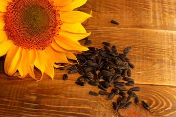 Sunflower seeds №32758