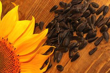 Sunflower seeds №32759