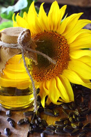 Vegetable oil №32715