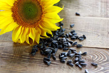 Roasted sunflower seeds №32755