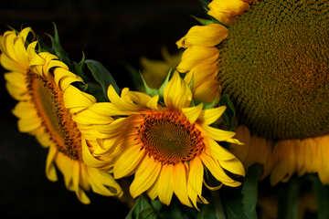 Bild mit Strauß von Sonnenblumen №32803