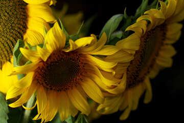 Postkarte mit Strauß von Sonnenblumen №32802