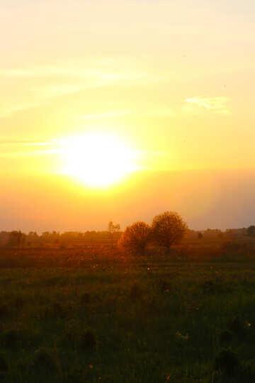 Vivid sunset №32454