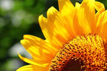Congratulation flower form №32829