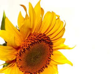 Congratulatory form with flower №32769