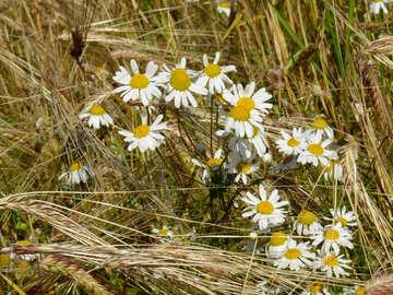 Malezas flores №32521