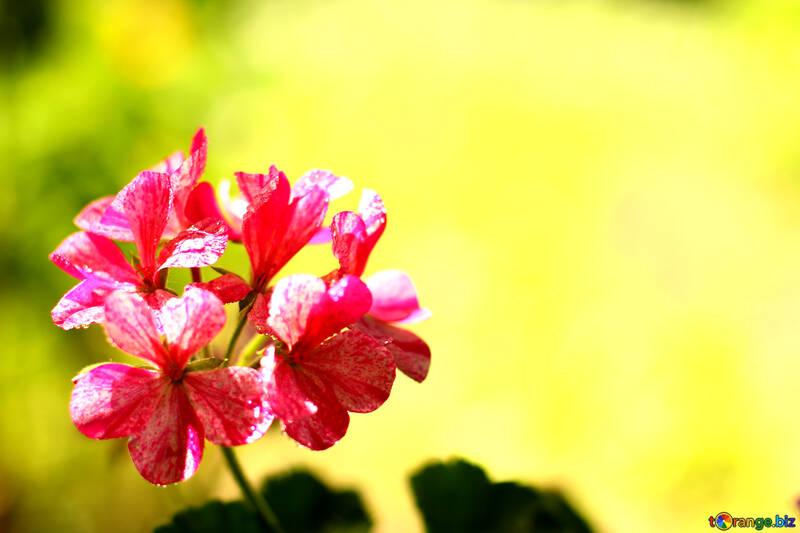 Hintergrund mit Blume №32402