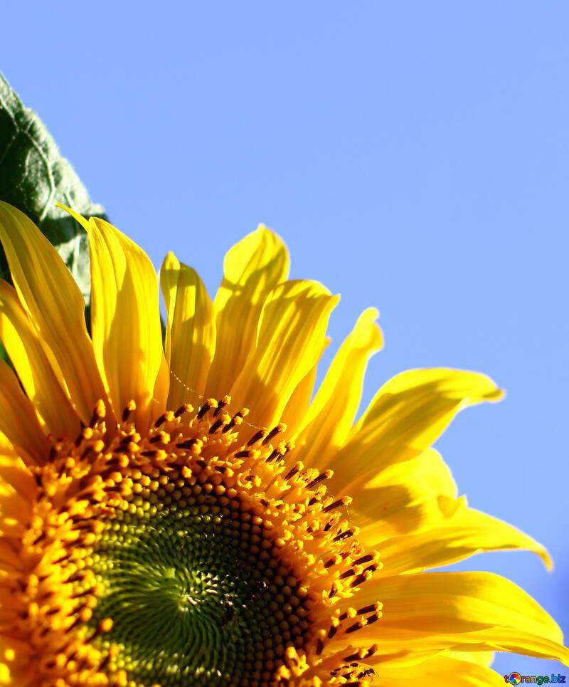 Herzlichen Glückwunsch an die blau Hintergrund mit gelbe Blume №32680
