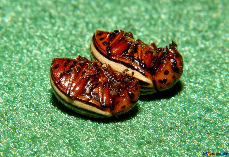 Pest control №32150