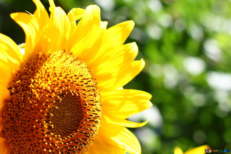 Desktop flower №32828