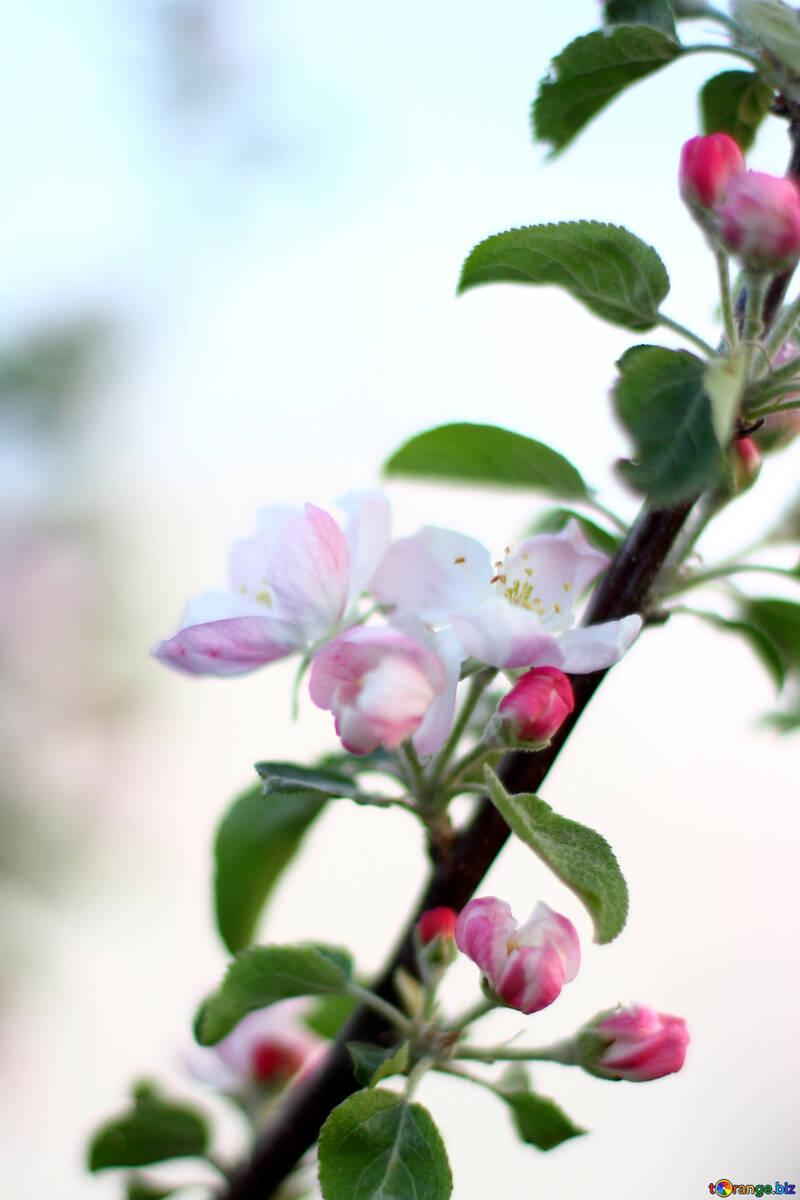 Цветущее дерево в саду  №32429