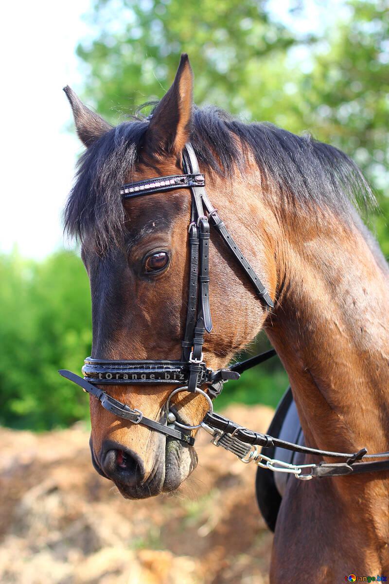 Portrait of horse desktop vertical background №32344