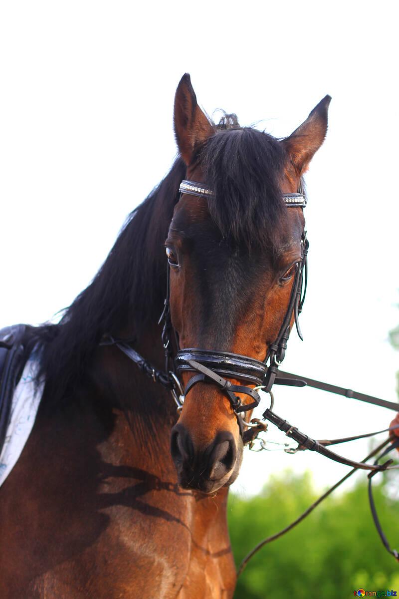Costume marron de cheval №32337