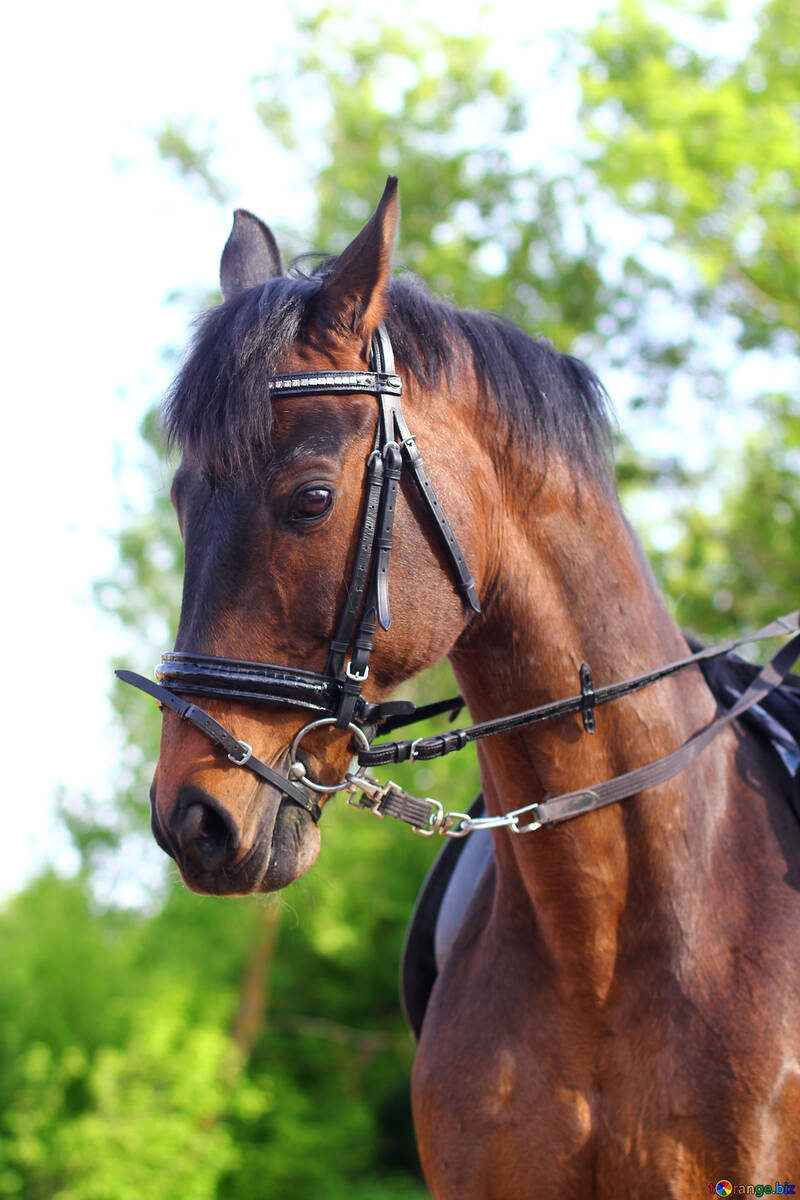 Конь №32341