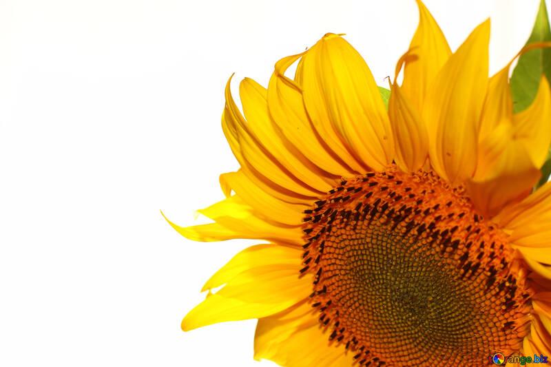 Blank greetings with flower №32765