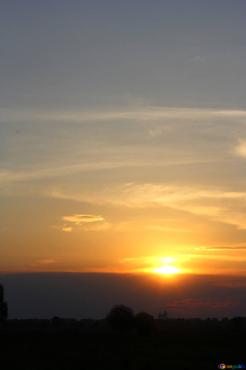 Beautiful sunset trees №32445