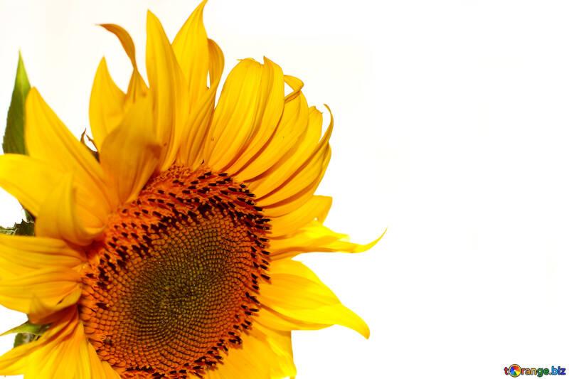 Glückwünschende Form mit Blume №32769