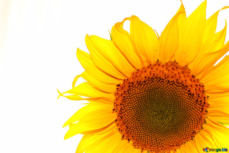 White background with flower in the corner №32782