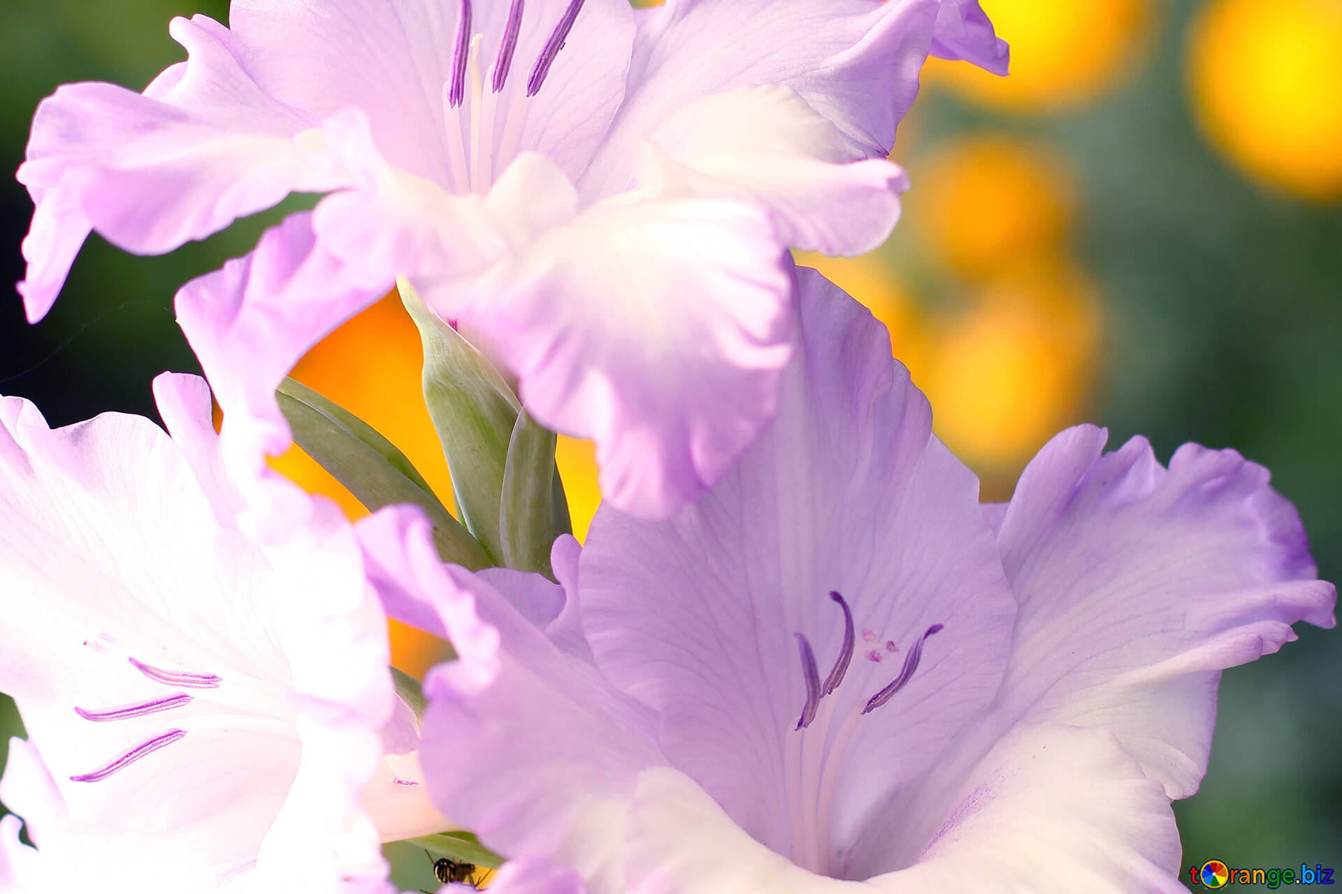 Background for congratulations beautiful flowers for congratulations download free image beautiful flowers for congratulations in hd wallpaper size 1920px izmirmasajfo